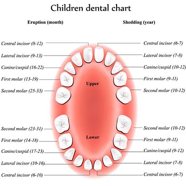 Children's Tooth Chart in Saint-Dorothée, Laval